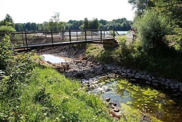 Was der Bürgermeister zur geplanten Rheinbrücke sagt