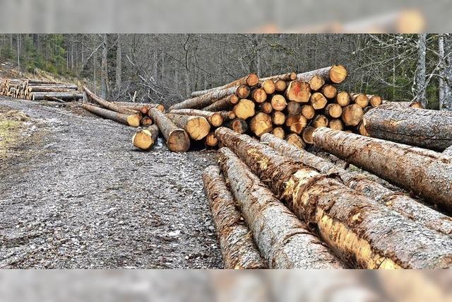 Betreuung des Waldes ist geklärt