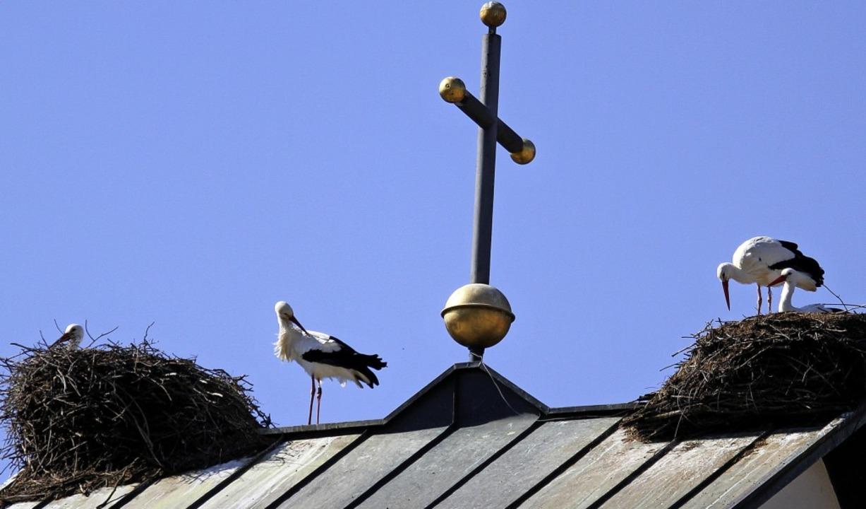 Das Dach der St.-Michael-Kirche Gutach ist beliebt.   | Foto: Daniel Fleig