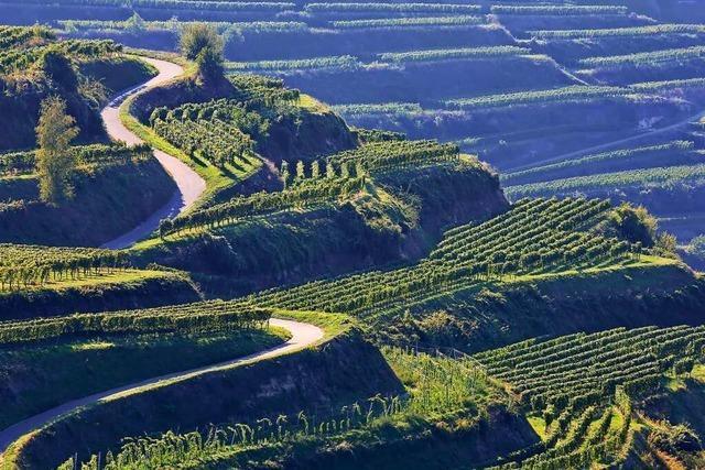 Diese drei Ausflugsziele auf der badischen Weinstraße muss man besucht haben