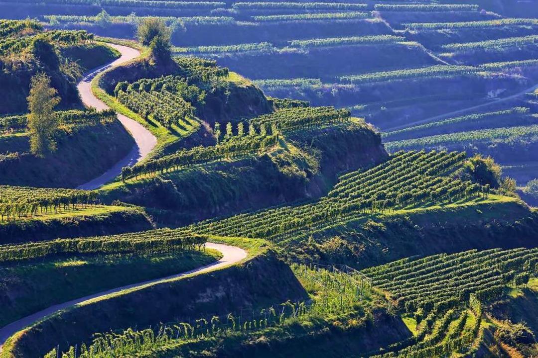 Der Kaiserstuhl ist bei Weinkennern, T...d Einheimischen gleichermaßen beliebt.  | Foto: fotoping (stock.adobe.com)