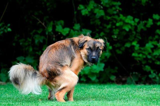Hundekot sorgt in Ettenheim wieder für Ärger