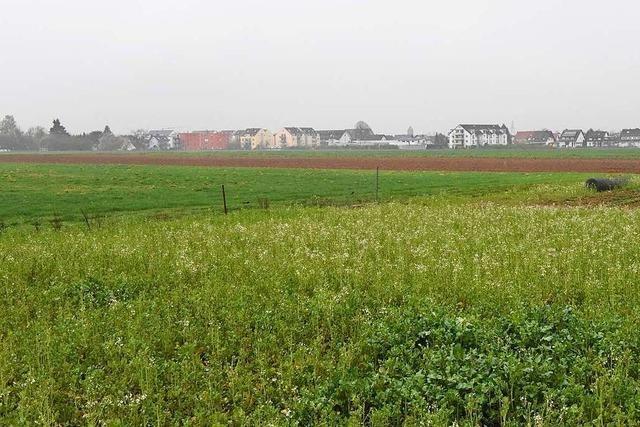 Denzlinger Gemeinde will Baugebiet nur entwickeln, wenn sie zu 100 Prozent Eigentümerin ist
