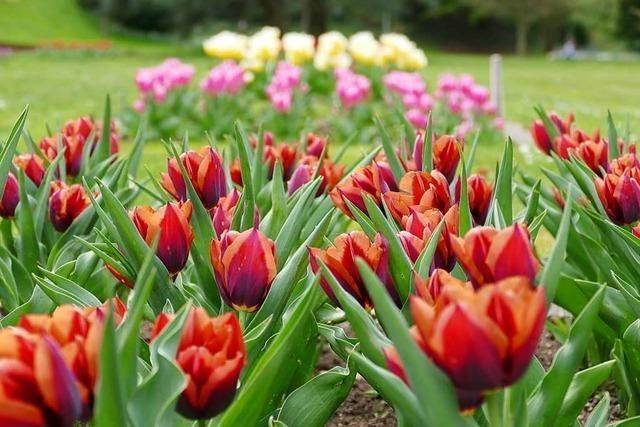 Tulpen, Wein und Zirkus