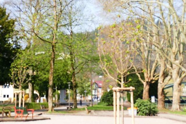 Bündelung der Baumbegutachtung in Waldkirch soll künftig Fehler vermeiden
