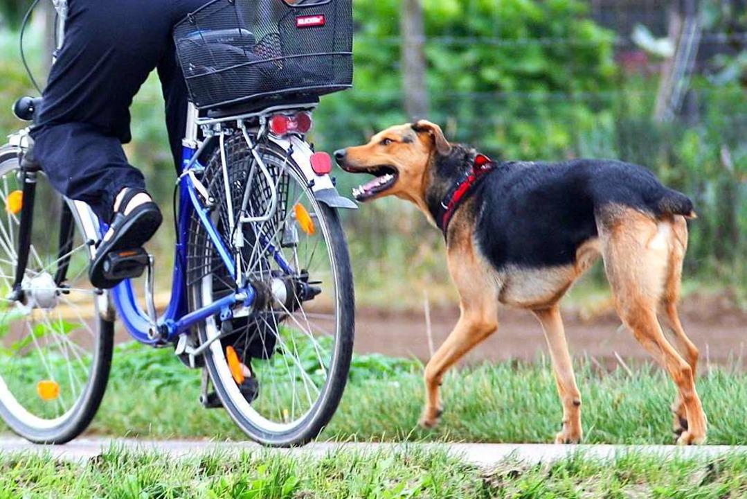 Der Hund schnappte am Dreisamradweg zu (Symbolbild).  | Foto: Daniel Ernst (Adobe Stock)