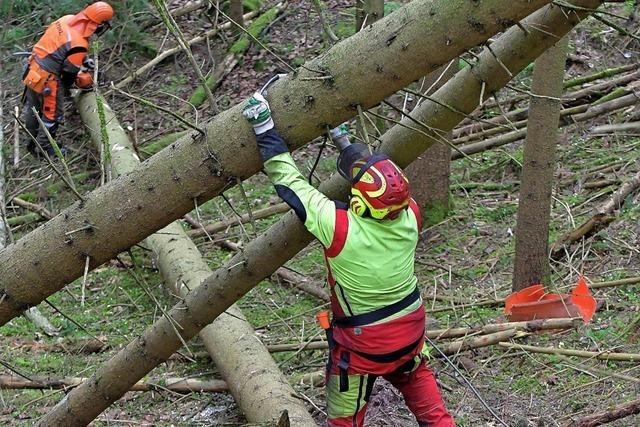 Waldbesitzer gehen genossenschaftlichen Weg