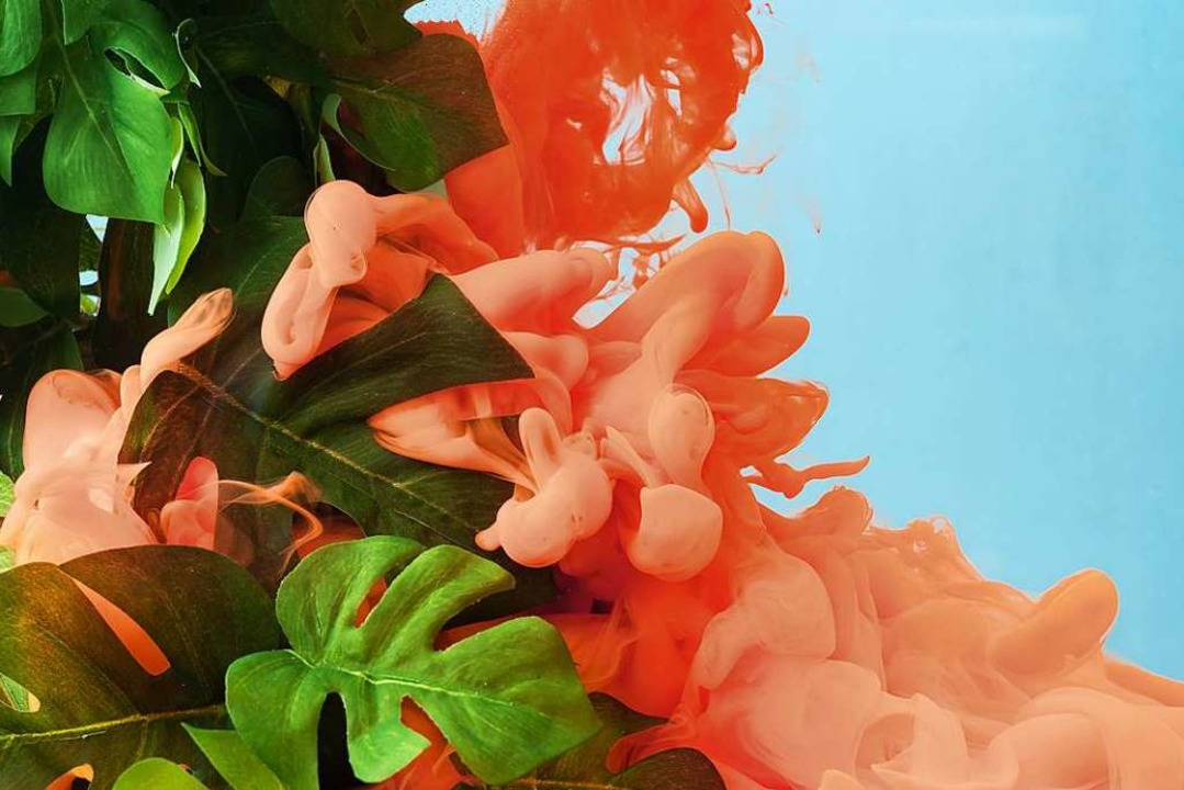 Ein satter Korallenton, tiefes Dschung...u gehören zur Trendfarbenpalette 2019.  | Foto: Zamurovic (stock.adobe.com)
