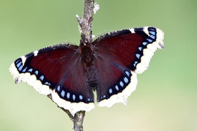 Der Schmetterlingsforscher André Grabs spricht in Kandern über das Insektensterben