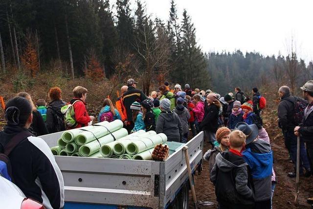 Schüler pflanzen 400 Bäume am Hinteren Heuberg