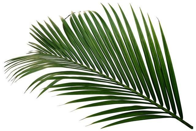 Palmen als Symbol für Glück