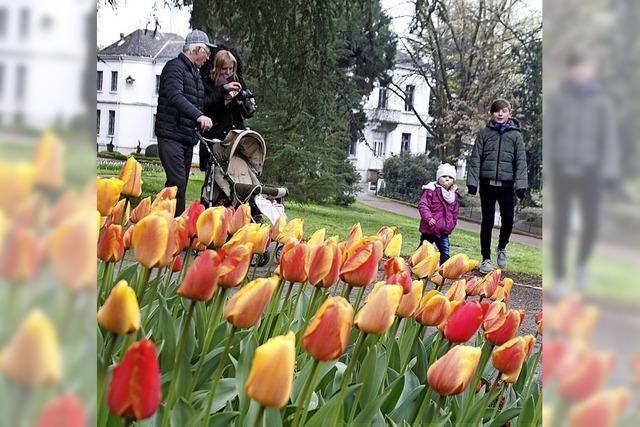 Verregnetes Tulpenfest