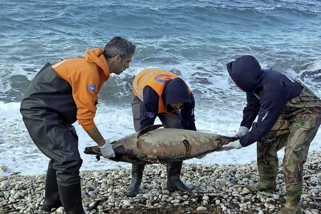 Delfinsterben in der Ägäis