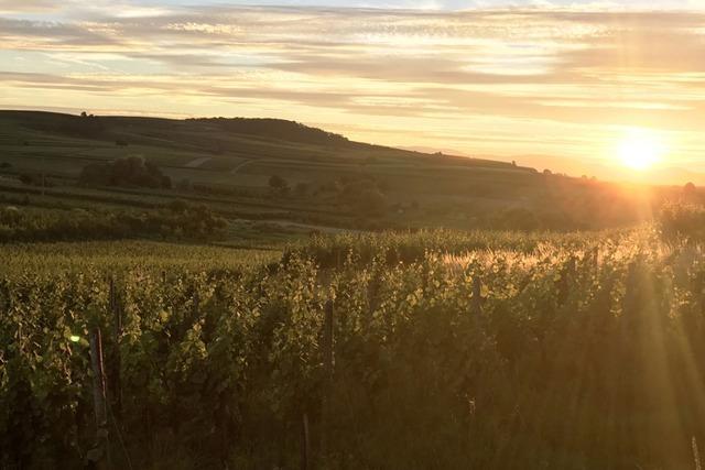 Badischer Wein – mehr als 2000 Stunden Sonne