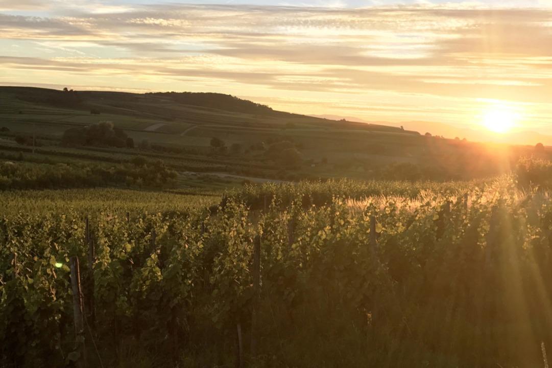 Nirgends in Deutschland scheint so viel die Sonne wie in der Weinregion Baden.  | Foto: Badischer Wein