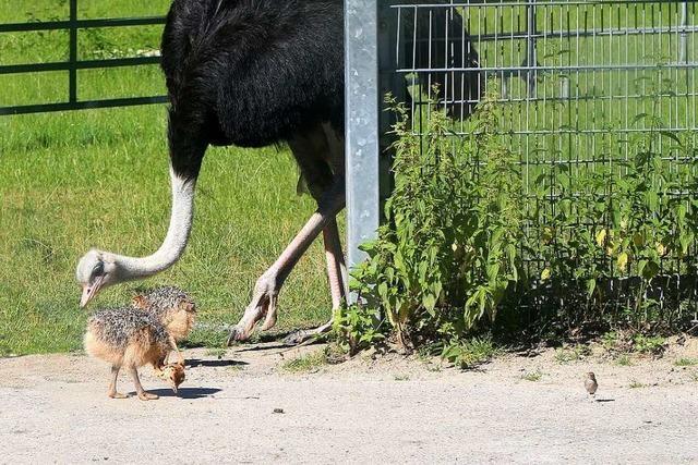 Auf dem Mundenhof sind am Wochenende 15 Tierbabys auf die Welt gekommen