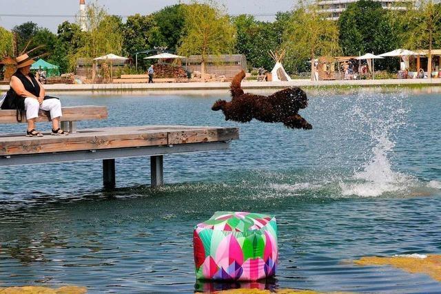 Nur Hunde dürfen im Lahrer Stegmattensee nicht baden