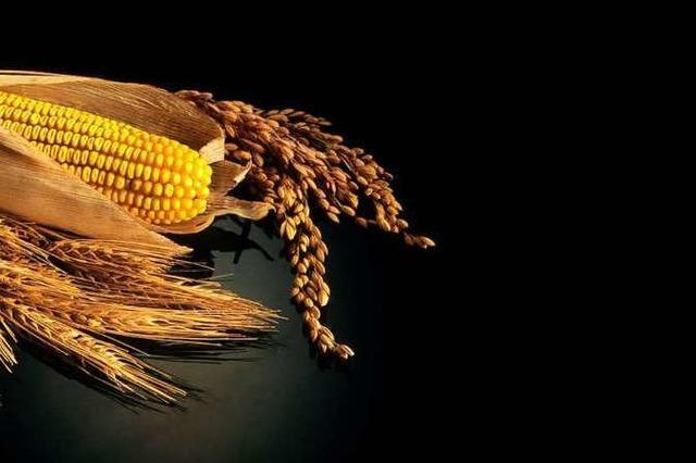 Zukunft der Welternährung: Sibirien könnte der Brotkorb sein