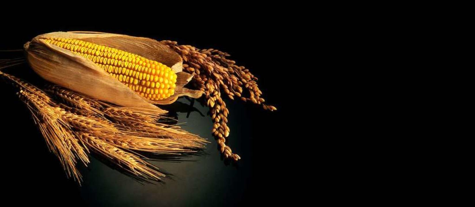 Der Getreidebedarf wächst.   | Foto: Felix/Stock.Adobe.Com