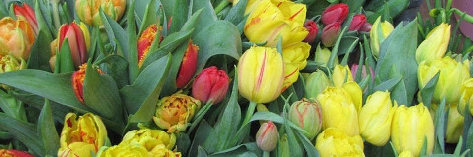 Colmar begrüßt den Frühling mit Märkten und Konzerten
