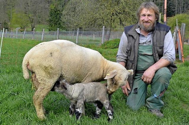 Schafe liegen ihm sehr am Herzen