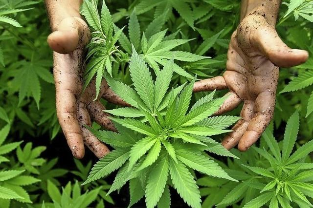 Mehr Drogendelikte gezählt