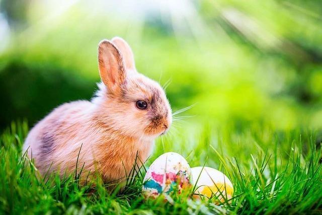 Ostern ist auch das Fest des Mümmelmanns