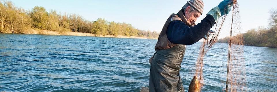 Eine Familie fischt seit 400 Jahren auf dem Rhein