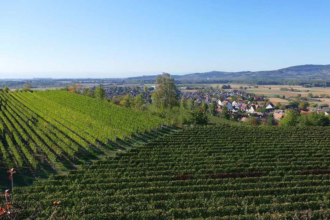 Herrliche Aussicht vom Tuniberg:  Wein...Kaiserstuhl und dazwischen  Merdingen.  | Foto: Franziska Dölling