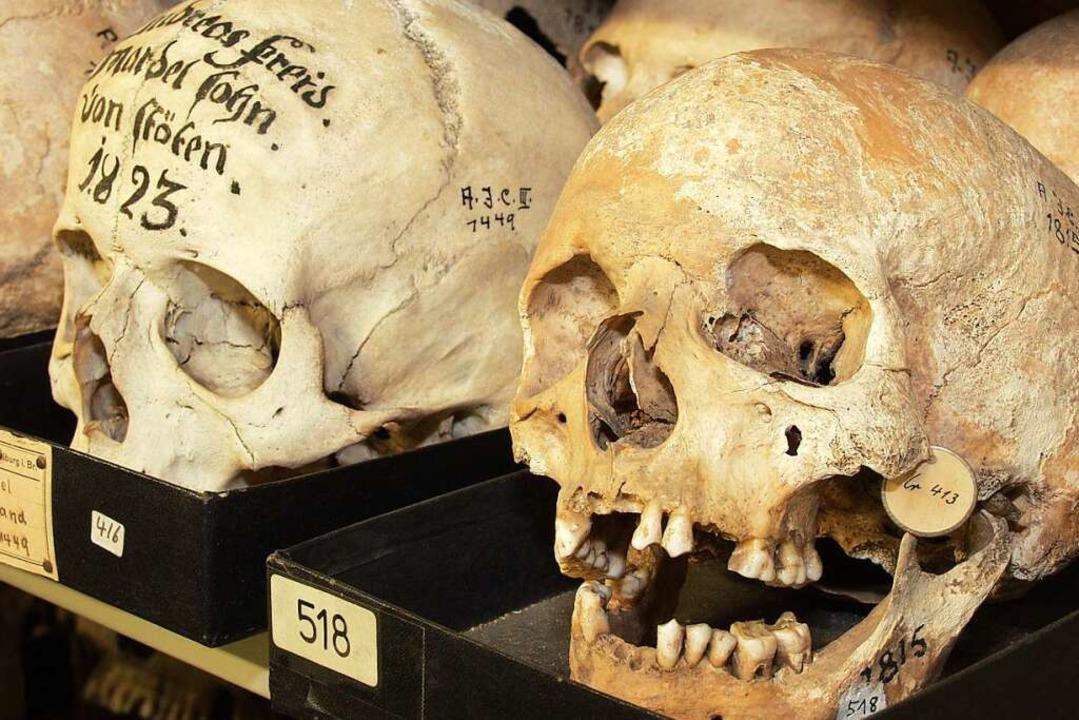 Schädel aus der Schädelsammlung der Un...n stammen aus der Region (Archivbild).  | Foto: Thomas Kunz