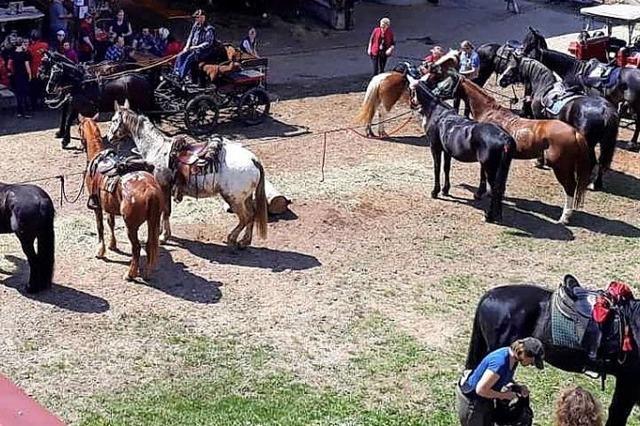62 Pferde sind beim Sternritt in Wehr dabei