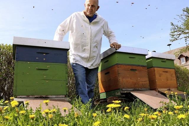 Imker kämpfen gegen Bienenseuche