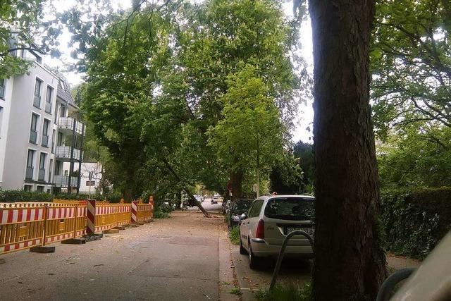 Sturm lässt in Freiburg Baum auf Auto stürzen