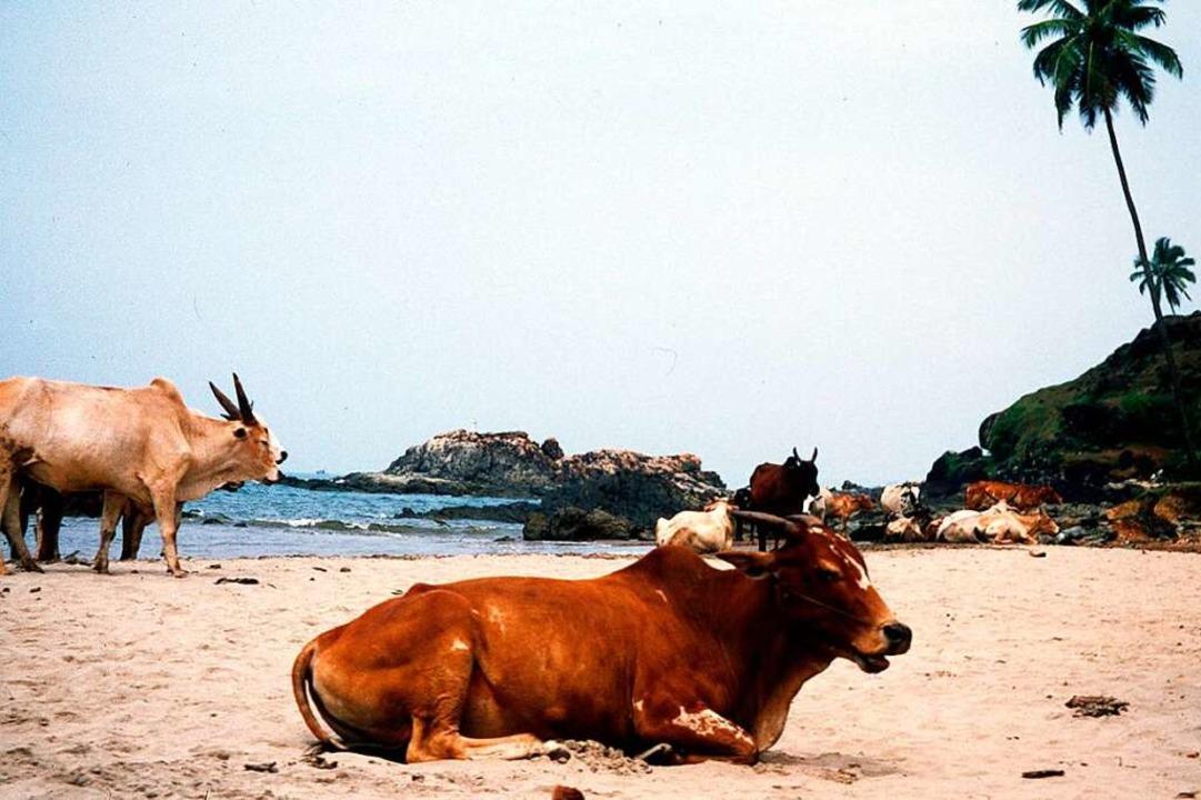 Kühe an einem indischen Strand  | Foto: Sven-E. Hauschildt