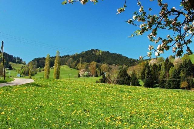 Kein Maifest mehr auf dem Pfeiferberg in Kirchzarten-Neuhäuser
