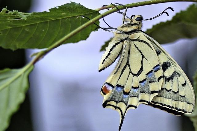 Schmetterlingsexkursion in den Frühlingswald