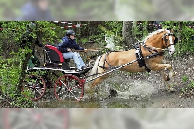 Wasserscheue Pferde und wilde Hindernisfahrten