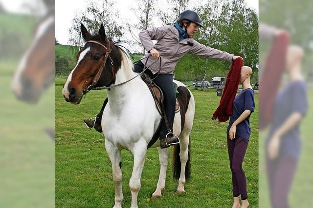 Wäscheaufhängen mit Pferd