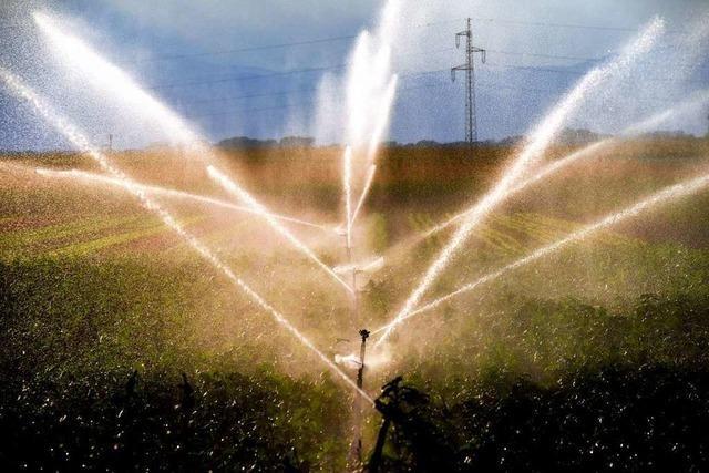 Bauern an der Elz fordern mehr Wasser zur Beregnung