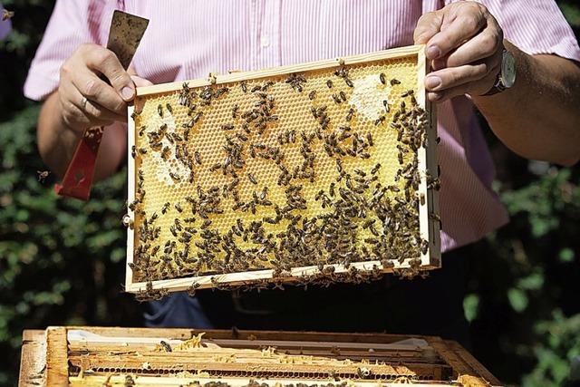 Boom am Bienenstand