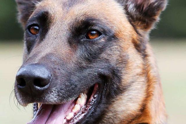 Mann bedroht Frau und Beamte mit Messer – und wird vom Polizeihund gebissen