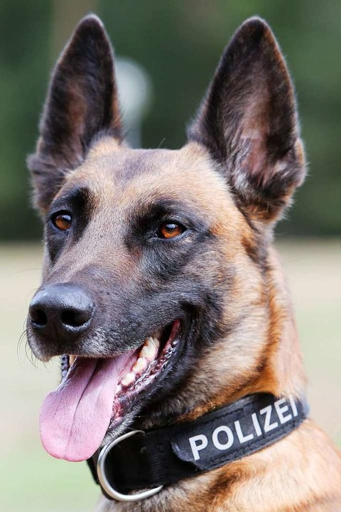 Weil sich ein 33-Jähriger in March nic... biss ein Polizeihund zu (Symbolbild).  | Foto: dpa