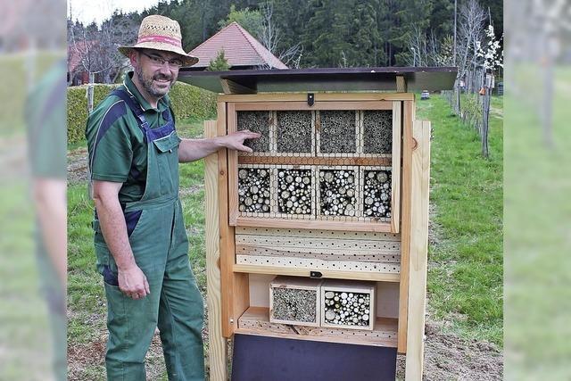 Neue Heimat für Wildbienen