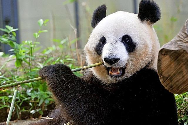 WWF gelobt Besserung