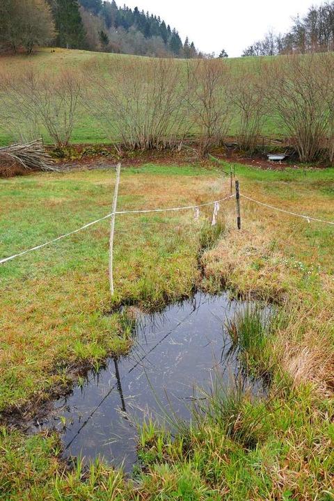Auch an dieser Stelle bei Fröhnd legen Amphibien ihren Laich ab.    Foto: Sattelberger