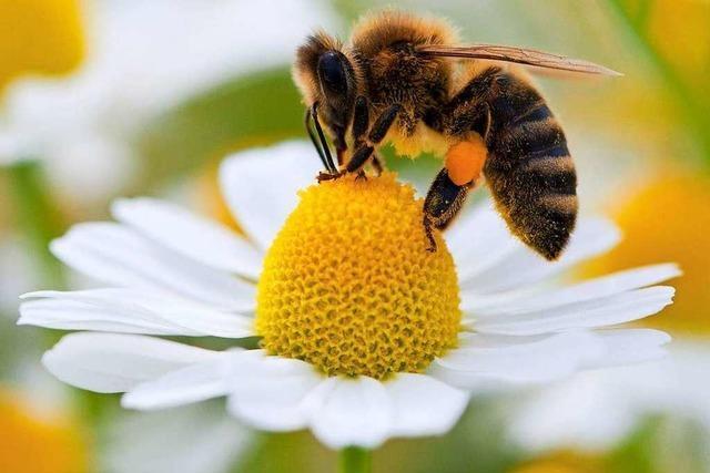 SPD setzt sich dafür ein, dass Lörrach keine Pestizide mehr einsetzt