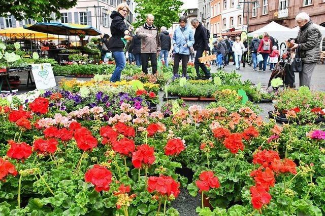 Den Pflanzen tut der Regen beim Lörracher Blumenmarkt gut, den Händlern nicht