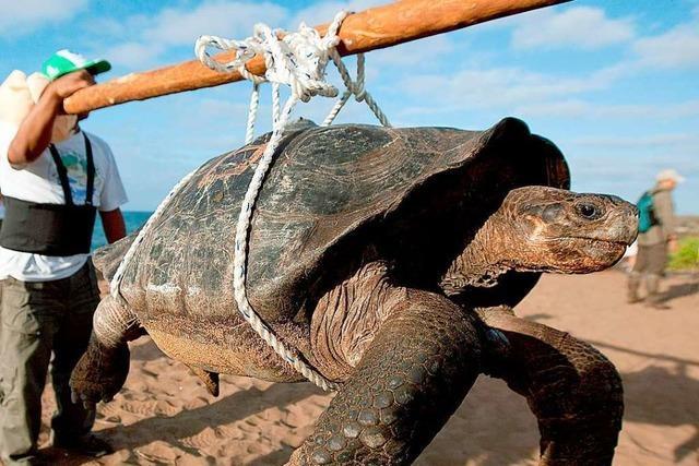 Dramatischer UN-Bericht: Eine Million Tier- und Pflanzenarten vom Aussterben bedroht
