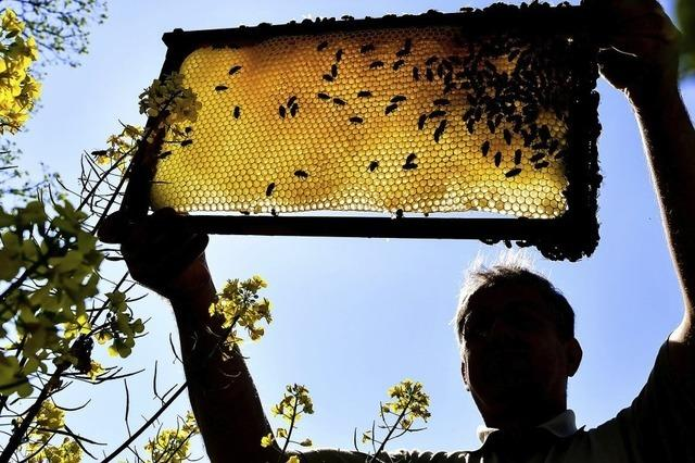 Sommer-Erlebnisprogramm des BUND Hochrhein widmet sich den Insekten