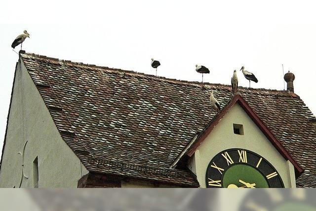 Vogelretter haben zu tun